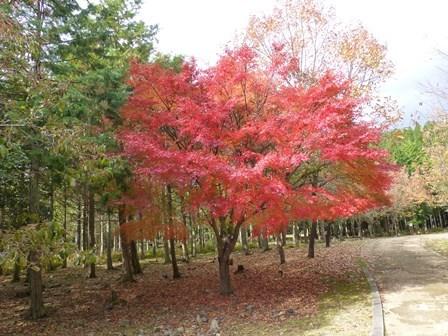 みのお記念の森 (56)