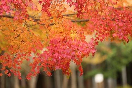 みのお記念の森 (57)