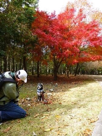 みのお記念の森 (59)