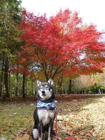 みのお記念の森 (60)