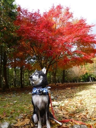 みのお記念の森 (61)