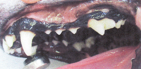 2018歯石除去9