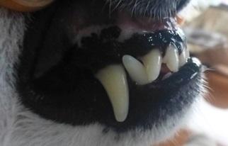 2018歯石除去16