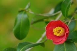 冬の花11