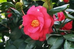 冬の花16