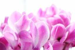 冬の花17