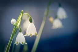 冬の花23