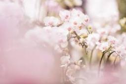 春の花13