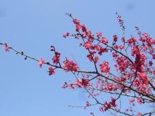 春の花24