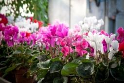 冬の花14