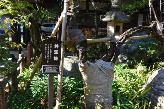 愛宕神社⑧