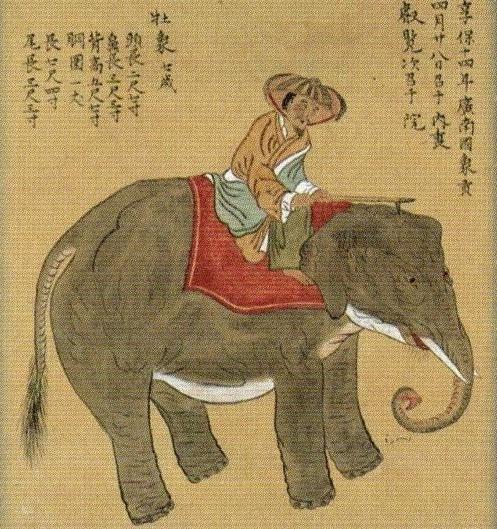象小屋④享保14年渡来象之図