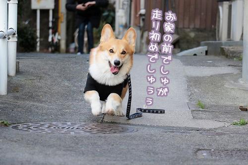 走り初め~