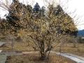 P1040793 日本一の巨木20