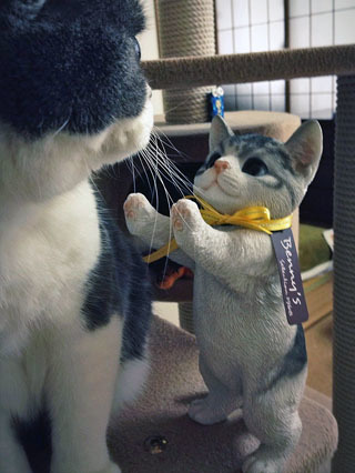 かわいい子猫ちゃん