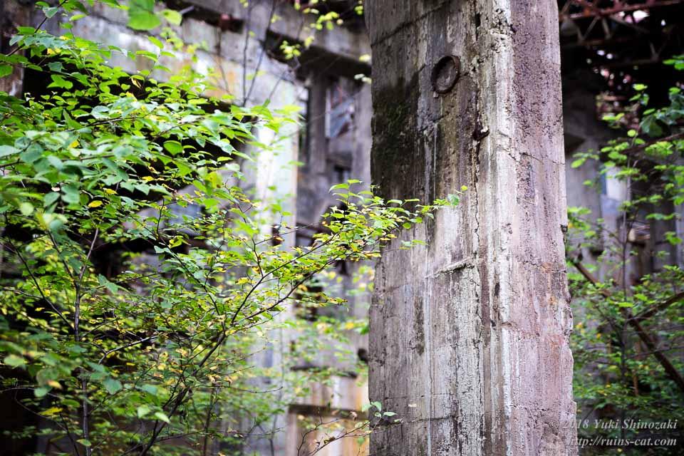 無機質なコンクリートと有機質な植物との見事な調和