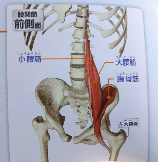 バイク腰痛の原因を探りに身体ケアへ。ほぼ解を得た。