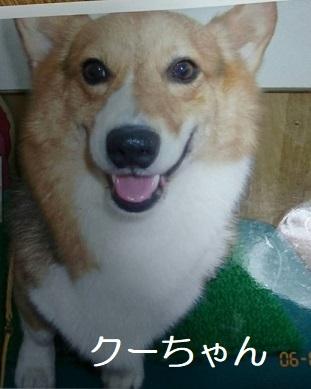 くーちゃん1