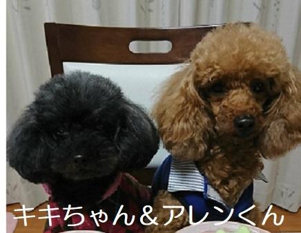 キキちゃん&アレンくん