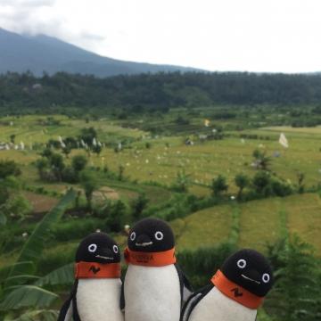 20171230-Bali (22)