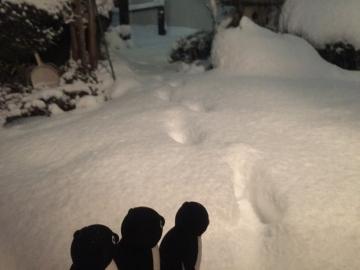 20180122-雪 (4)