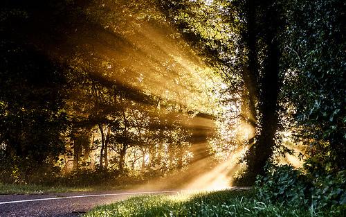 光のさす森2