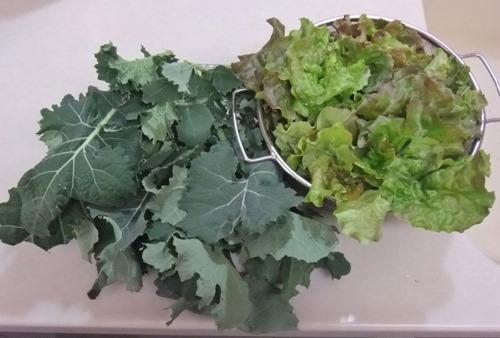 171218kale_lettuce