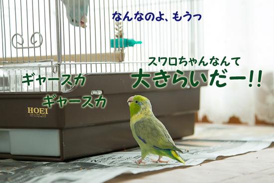 0S1W5571-4.jpg