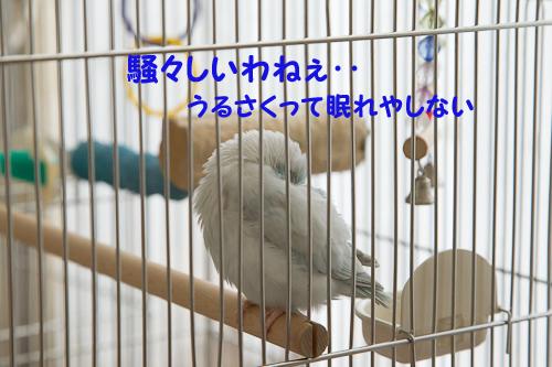 0S1W9832.jpg