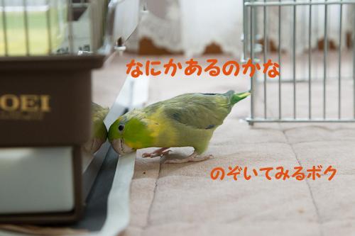 0S1W9861.jpg