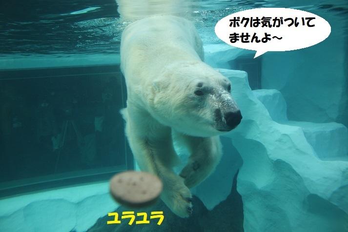 204 - コピー