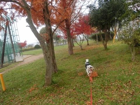 2017-11-30 散歩 010 (480x360)