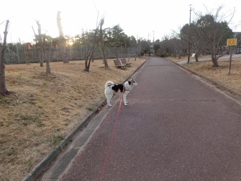 2018-01-02 散歩 006 (480x360)