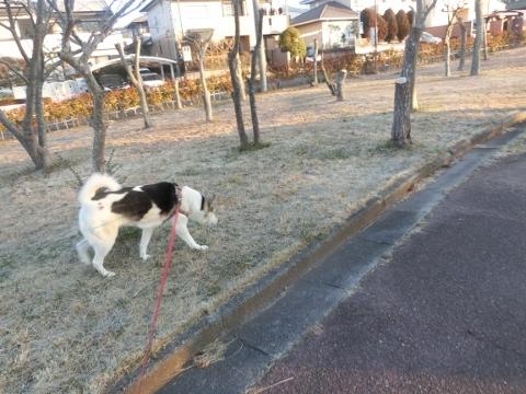 2018-01-10 散歩 004 (480x360)