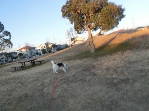 2018-01-24 散歩 007 (480x360)