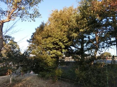 2018-02-04 散歩 011 (480x360)