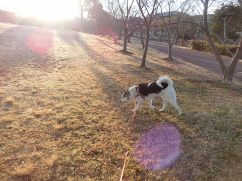 2018-02-27 散歩 005 (480x360)
