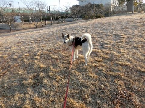2018-02-27 散歩 006 (480x360)