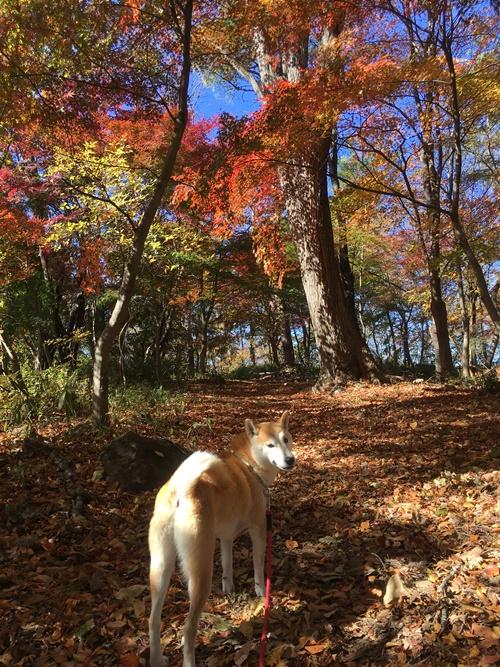 里山で紅葉散歩
