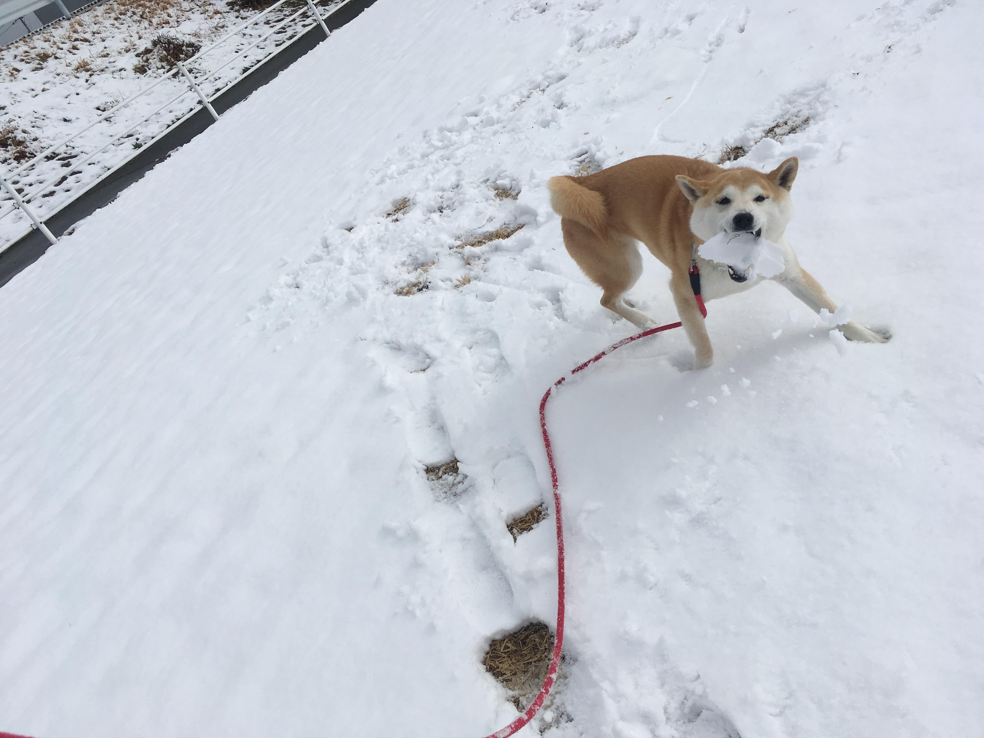 雪に大興奮!
