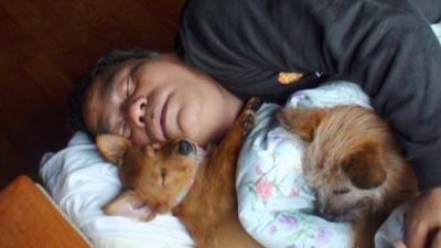 愛犬サンバ、サンシン