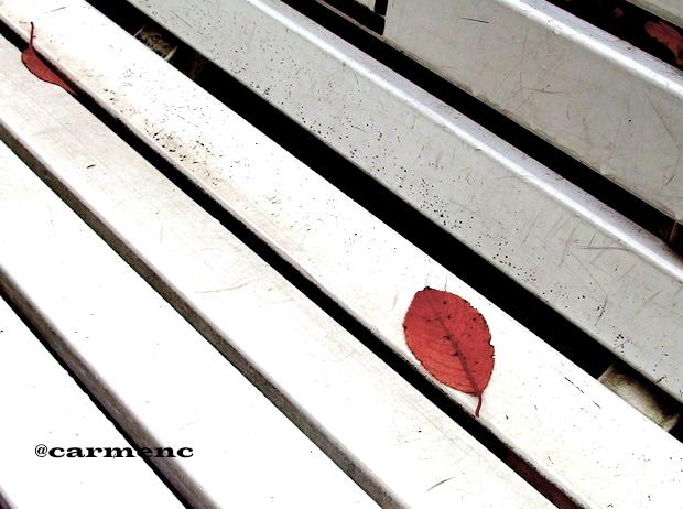 ベンチに枯葉2枚