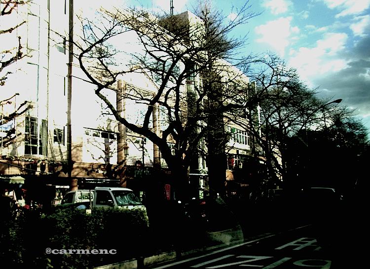 メイン通りの樹木と空