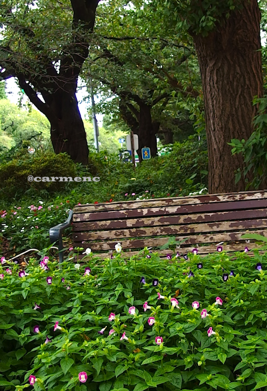 大学通のベンチ