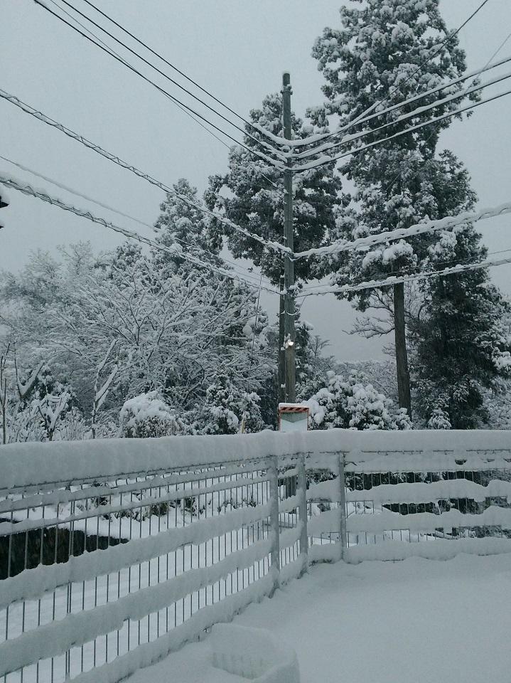 フェンスに雪