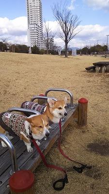 s-みずどり公園8