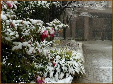 20180124  校内  4    雪の日