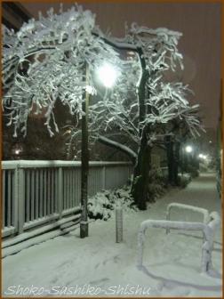 20180124  道  14    雪の日