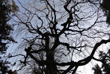 巨木が沢山