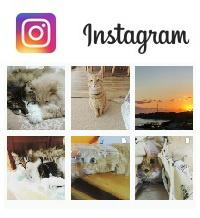 satori4neko-instagram